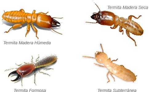 Resultado de imagen de imagenes de termitas